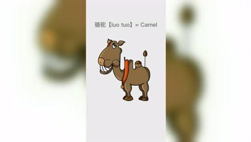 妈妈画的骆驼VS我画的骆驼