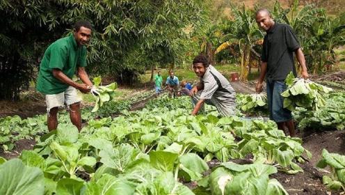 非洲居民:我们土地种不了蔬菜,不料中国人来之后,却都心服口服