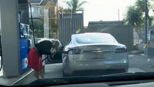 加油站偶遇特斯拉,女司机拿油枪狂捅充电孔,看得后车一脸懵逼