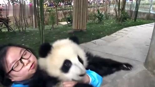 看到奶妈享受后宫熊猫三千的帝王待遇,网友大呼:你走开,让我来