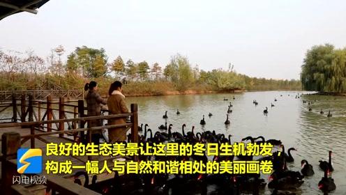 初冬时节,台儿庄双龙湖湿地生态旖旎醉游人