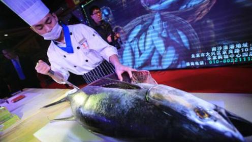 世界上最贵的鱼,捕捞一条马上变成富豪,平常人都吃不起!