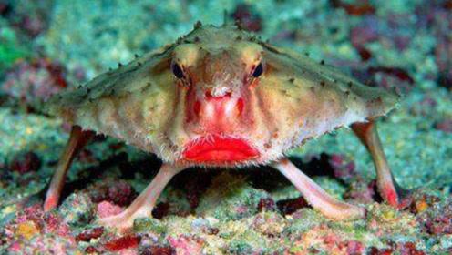 """国外海底发现长着""""烈焰红唇""""的生物,摄影师到就爆笑:太惊艳!"""