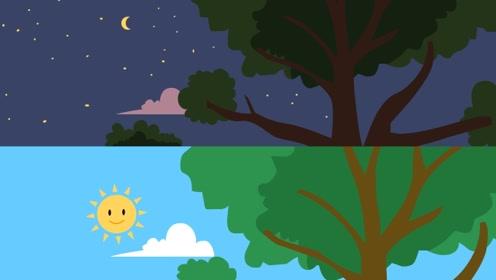 太阳看上去明明要比星星大很多,为什么有人说它和星星差不多大?