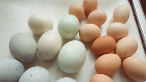 倍儿健康:鸡蛋、鹅蛋、鸭蛋哪个营养价值更高 结果竟是这样