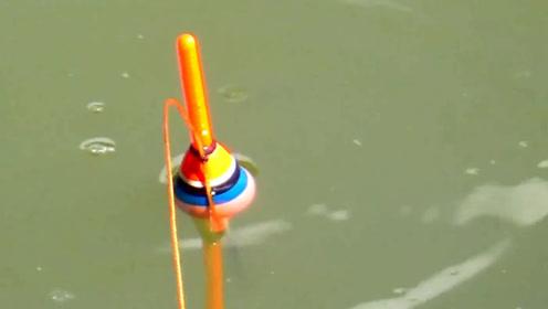 这鱼钓的简单,随便一把竿就能玩的很过瘾!