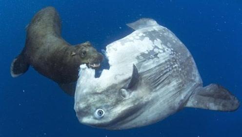 世界上最笨的鱼,身体被咬一半却毫无知觉,网友:没绝种真是奇迹!