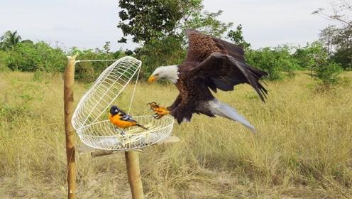 捕鸟陷阱制作,你觉得怎么样啊?