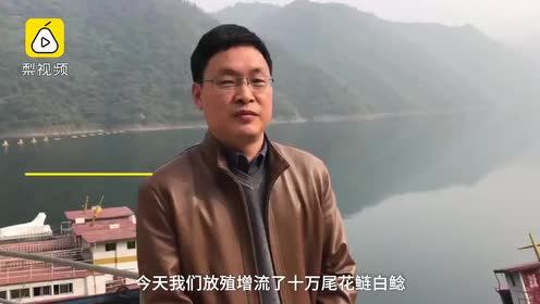 """湖北十堰""""水缸""""投10万鱼苗喂鸟越冬:鳙鱼等长得快"""