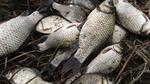 12米鱼竿 钓两米远的岸边 是不是大材小用?