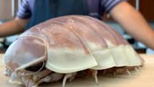 深海巨虱是什么味道?日本大厨一刀下去,看得人口水直流!