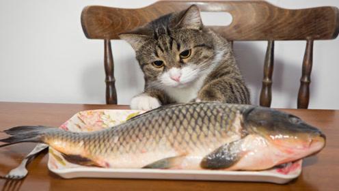 """为什么猫从不会被鱼刺""""卡住""""?镜头放慢50倍,答案一目了然!"""
