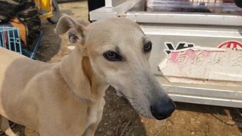 早上一车狗笼子下午送走一批狗,狗市上还碰到个大网红,二哈320