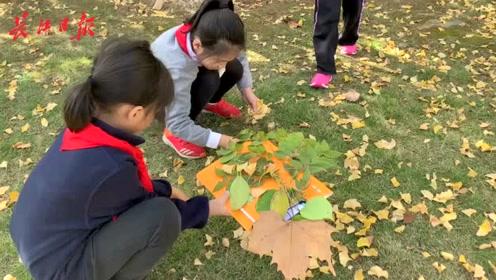 手动留住秋天,他们在月湖畔收集树叶DIY作画