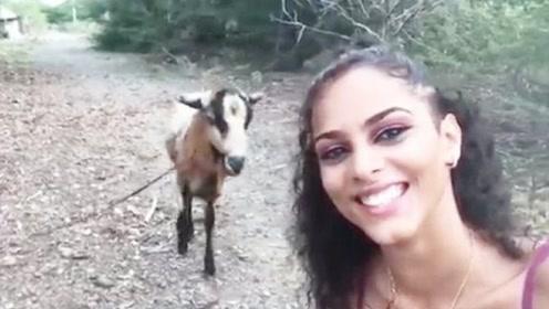 女子调戏山羊,结果山羊被惹怒,三秒后女子的遭遇也太惨了!