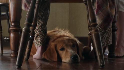 狗狗去世前为何离家出走?答案让人心酸