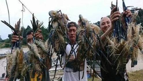 越南淡水虾王泛滥,当地人很头痛,网友:为什么不入侵中国?