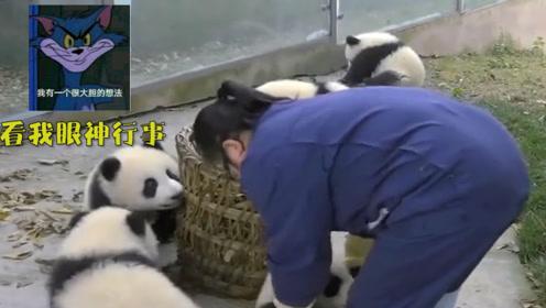 熊猫宝宝联合坑奶妈:看我眼神行事!奶妈:臭熊孩子!