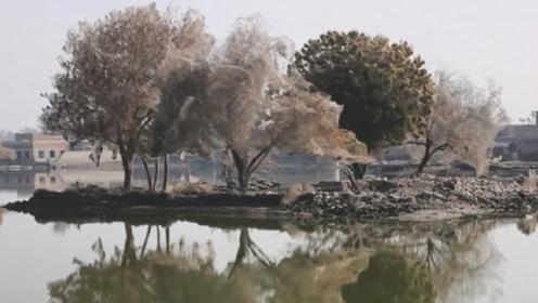 洪水过后,全镇的树变得奇奇怪怪,专家看后脸色一变:立即逃走!