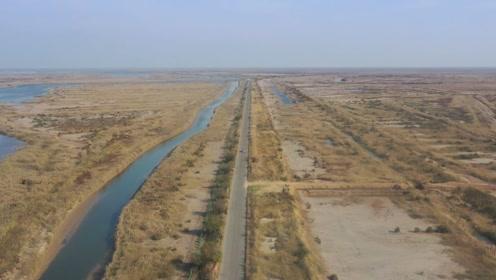 航拍东营黄河三角洲,大片芦苇湿地一望无际