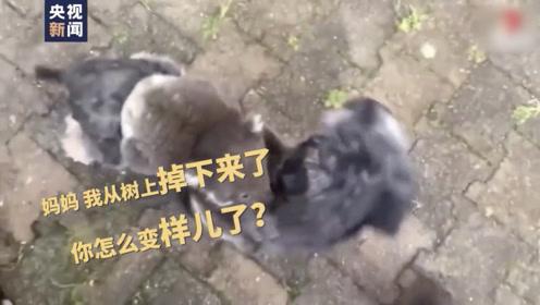 小考拉误认狗狗当妈妈