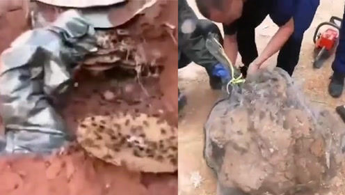 9位村民回家途中遭黄蜂围攻致3死5伤 巨型蜂巢被挖出体积骇人