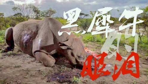 画面触目惊心!南非救援队从偷猎者手中救出重伤濒死黑犀牛