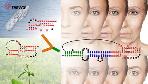 """植物端粒酶首次被破解,人类将触及长寿的""""开关""""?"""