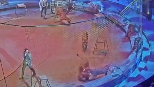 马戏团的老虎和狮子发生冲突,狮子直接被打懵,老虎太霸气了