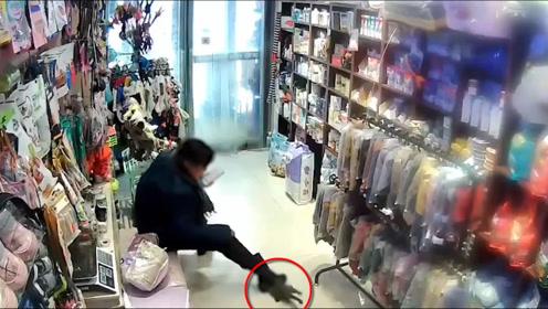 女子宠物店退猫未果 将猫重摔在地狠踩:是死是活跟别人没关系!