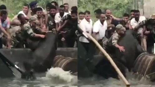 大象会溺水?大象妈妈带宝宝掉进池塘险溺亡,印度士兵拽鼻救援
