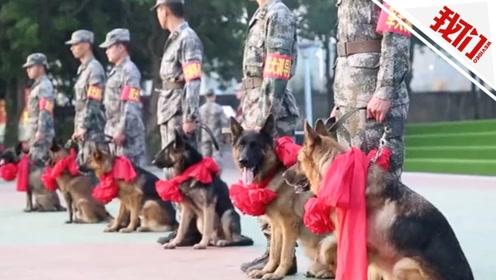 """8只军犬正式编入作战序列 """"无言战士""""晨光中帅气入列"""