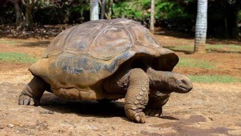 世界上最长寿的四种动物,乌龟仅排第四位,而第一竟然能永生!