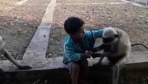 印度5岁男童,可以听懂猴子说话,无数游客前往观看