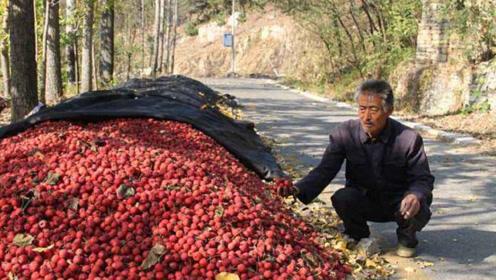 """果园堆积如""""红山"""",一斤卖7毛,摘了没人收购"""