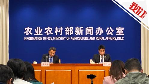农业农村部:全国生猪生产止降回升 11月生猪价格回落