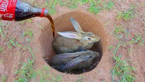 在野外深坑里倒进一瓶可乐,结果意外收获可爱兔子,这是什么情况