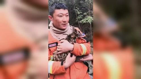 """铁骨柔情!森林火灾后消防员救出小鹿争当""""奶妈"""" 引网友夸赞"""