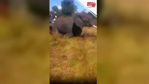 野生大象被人类围攻:遭斧头大刀乱砍 鲜血淋漓倒地身亡