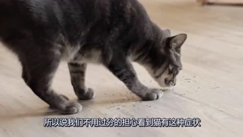 猫薄荷到底为什么那么吸引猫咪,甚至会让猫咪上瘾,原来是这个原因!