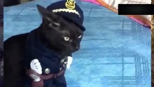 这样帅气的黑猫警长你们见过吗?网友:果然帅跟黑是绑定的!