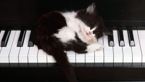 手机的拨号键盘竟然能弹奏出这么好听的乐曲!赶快去试试!