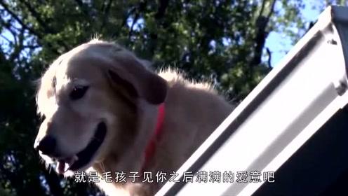 忠心狗狗,每次都在屋顶等待主人回家