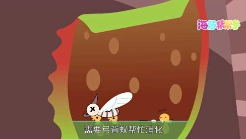 船长日记-蚂蚁和猪笼草