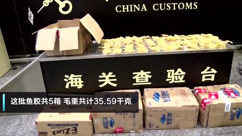 杭州海关查获浙江近年来最大一起违规携带鱼胶进境案 总计超70斤!