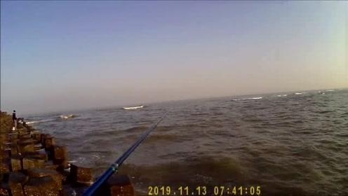 前打钓鱼,三尺水深,50厘米大黑鲷鱼,这种好钓点给我来一打