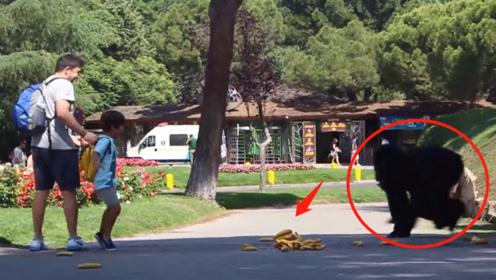 男孩在路边发现香蕉,还没等捡起来,下一秒被吓得扭头就跑