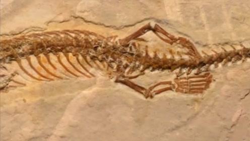 """""""画蛇添足""""不是多此一举,1.7亿年前蛇真的有腿,还是4条!"""