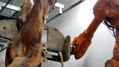 机器人屠宰,又快又准,以后脏活累活还是机器人来做