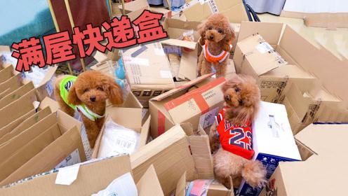 铲屎官把70个快递箱堆满一屋,3只狗狗高兴的蹦蹦跳跳钻来钻去!